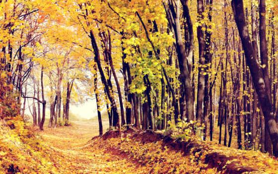 pictures, осень, pin, para, дорога, trees, los, листва,