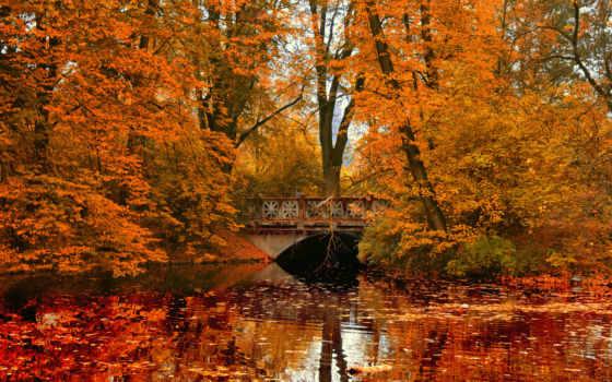 осень, park, trees