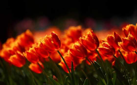 martha, цветов, красивые