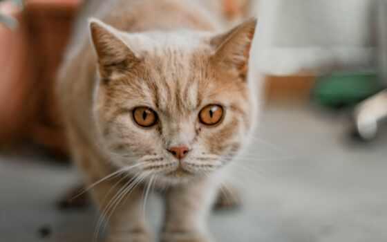 кот, pet, марти, лань, animal, prime, фото, facebook, glance, feline