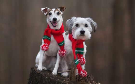 собака, кот, white, два, щенок, submit, категория, animal, протеин