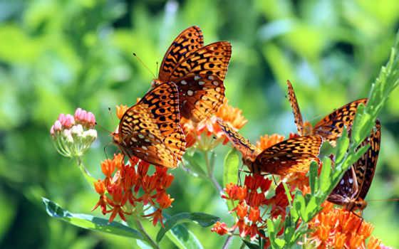 бабочки, лето, веточки, зелень,