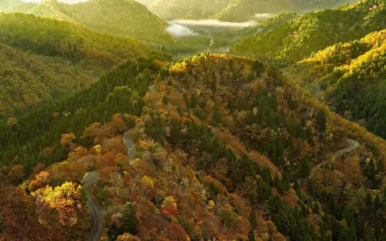 горы, trees, лес