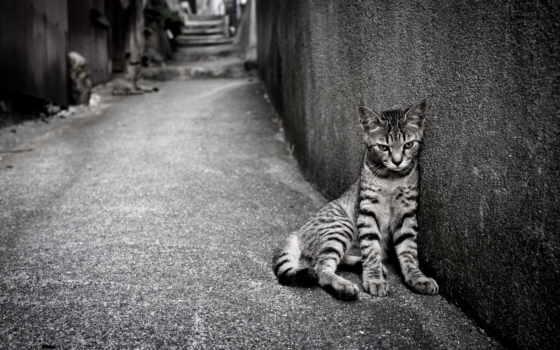 loneliness, кот, египетский, улица, mau, широкоформатные, рисунки, фотографий,