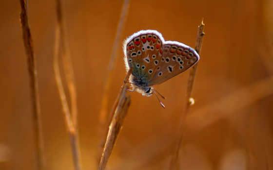 doğa, макро, makro, kelebek, böcek, бабочка, hayvanlar, life,