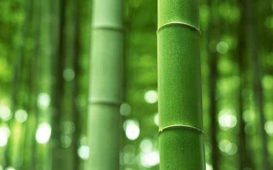 бамбук, макро