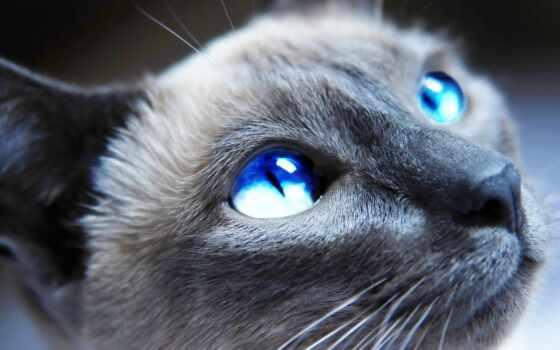 голубые, глазами