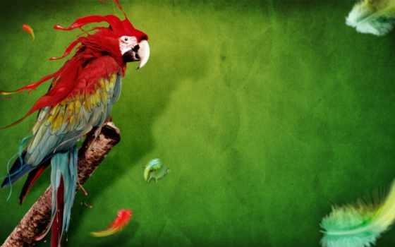 попугай, танцует