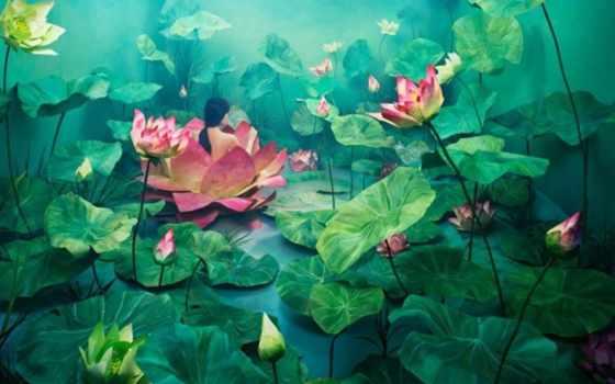 ди, paesaggi, sogno, lee, artista, suo, jeeyoung, piccolo, immagini,