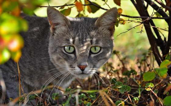 кот, морда, дек, трава, июнь, красивые, hunting,