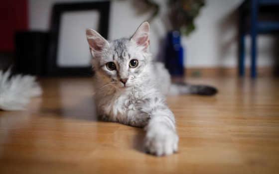 кот, дек, котэ, ложь, всех, тег, пол, есть, свет,