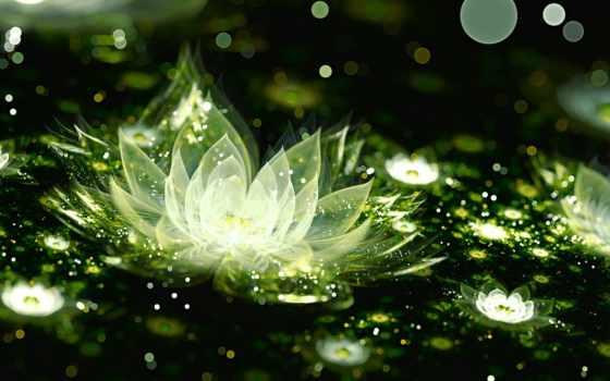 lotus, cvety, лотоса, зелёный, разрешений, красивые, white,