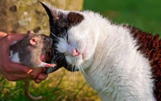 есть, дружба, кот, собака, кошки, друзья, mouse, zhivotnye, мышки,