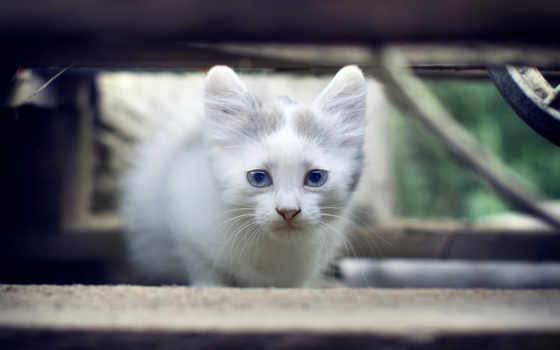 кот, megapixel, baby, more, animals, cats, zhivotnye,