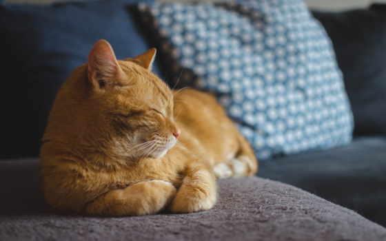 martha, кот