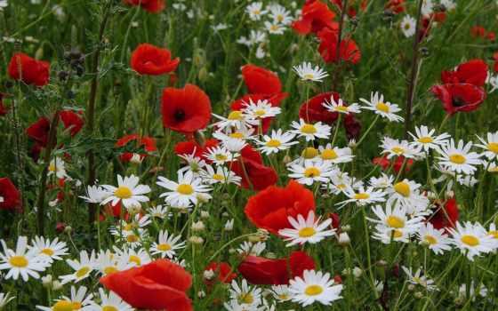 Цветы 25452