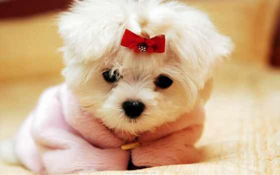 маленький щенок