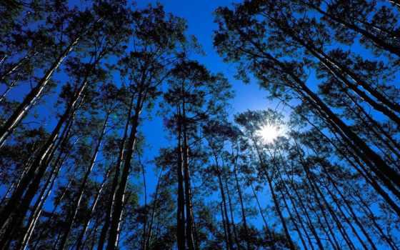 картинка, небо, деревья