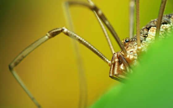 паук, mac, mobile, телефон, планшетный, ноутбук, насекомые, legs,