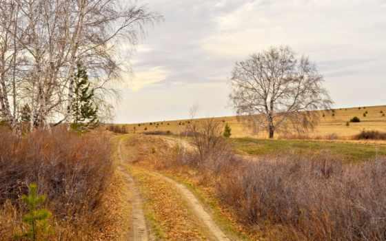дорога, free, trees, листья, photos, бесплатная, береза, ветви, без,