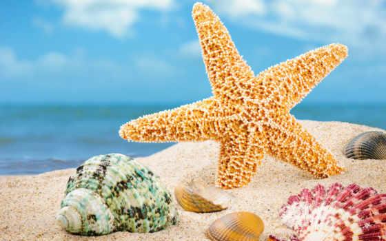 mt, summer, amazing, mixed, ракушки, морские, pack,