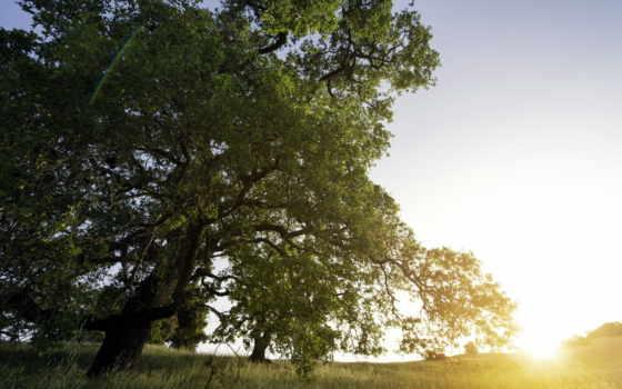 sun, закат, есть, свет, duvar, samsung, которых, тег,