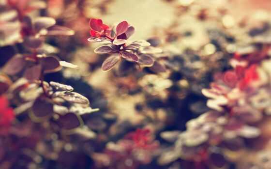 ,листья, веточка, лист, desire, магазин, растение