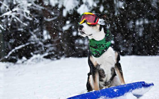 собака, pictures, марта, new, снег, твоей, друг,