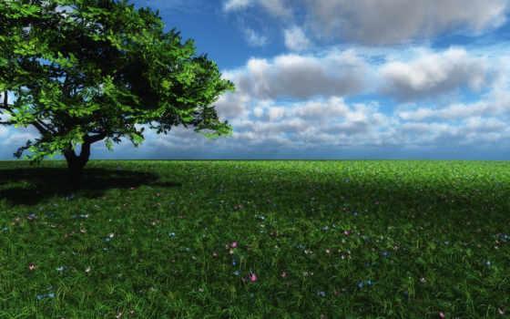 зелёный, land, природа