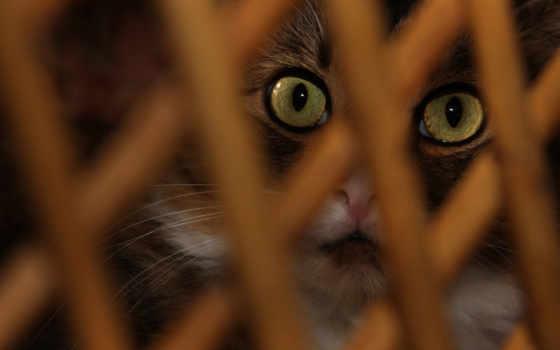 zhivotnye, нояб, кошки