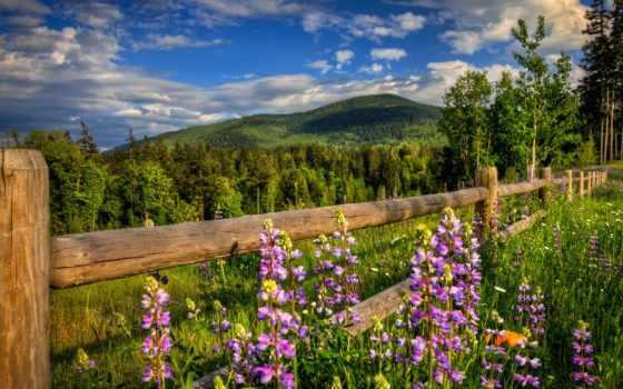 природа, весна, цветы
