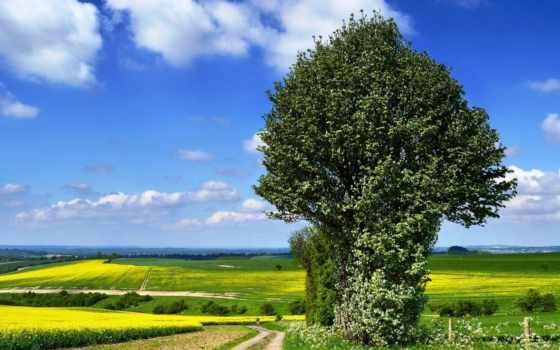 дерево, рапс, margin, дорога, одинокое, поле, природа, горы, цветение, istanbul,