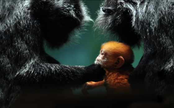 national, geographic, baby, animals, об, more, animal, pinterest, images,