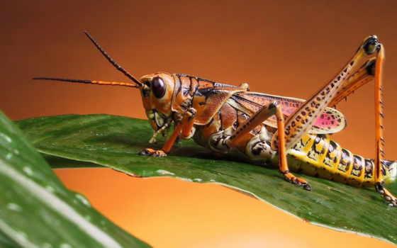 rub, насекомое, знаку, голавля, какое, кузнечиков, соответствует, насекомые, wasp,