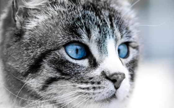 кот, взгляд, domestic, котенок, зеркало