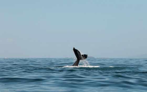 кит, море, preview, волна, fin, swim