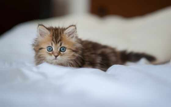 котенок, кот, animal, морда, пушистый, взгляд