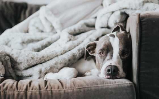 чёрный, белый, собака, pet, узкий, one, загрузить, хорошії, readivet