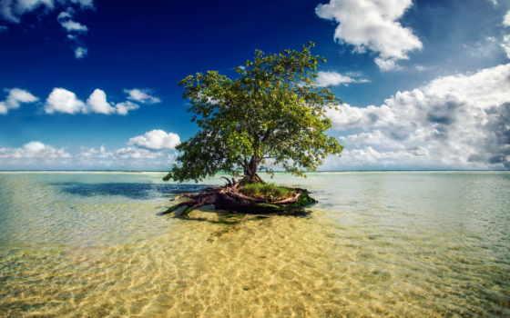 riviera, дерево, море, mexico, mayan, картинка,
