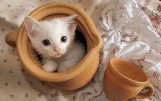 кот, котята, cup
