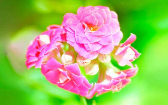 цветы, широкоформатные