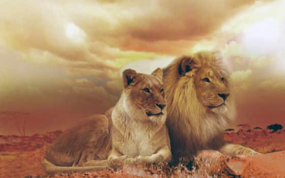 casal, cartão, leões, leão, bonito, zazzle, postais, постал, personalizáveis,