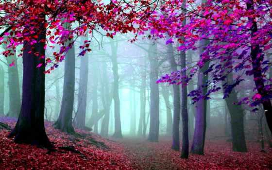 artistica, foto, artística, bosques, fotografia, una, imagen, imágenes, fotografía,
