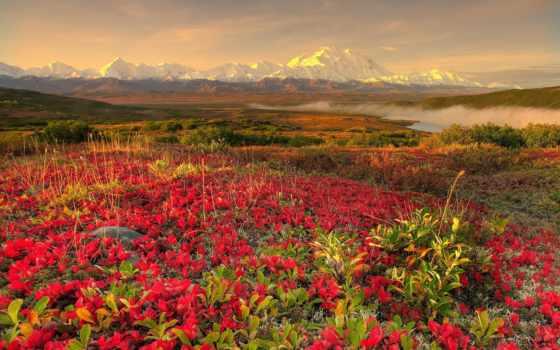 landscape, цветы, горы