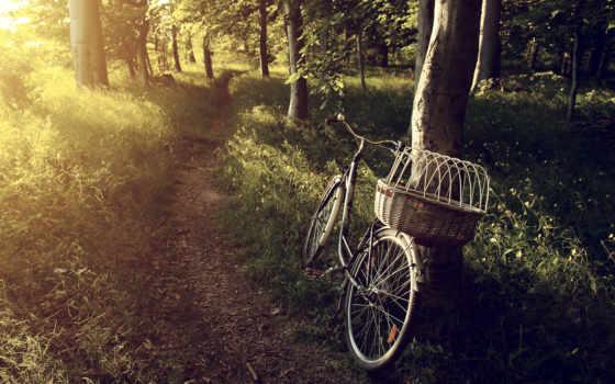 велосипед, прогулка, тропинка