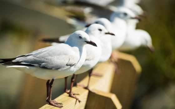 birds, dual, птица, multi, монитор, new, images,