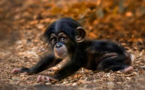 милые, обезьянки, zhivotnye, малыши,, смешные, обезьян,