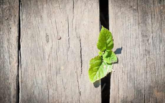 wooden, макро, широкоэкранные, широкоформатные, забор, зелёный, листочки, листочек, полноэкранные,