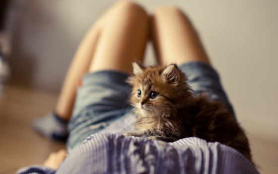 devushki, котенок, девушка, кот, девушек, пушистый, лежит,