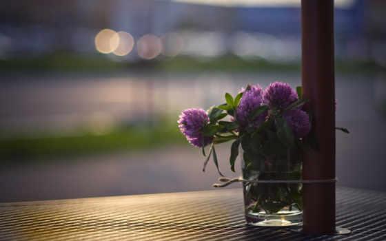 клевер, cvety, makro, svet, букет, стакан, улица,